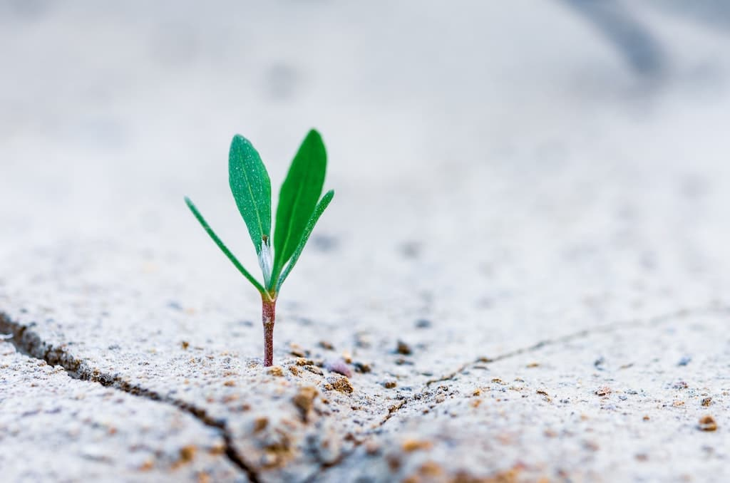 plant growing out of concrete, challenging psychedelic experiences result in growth