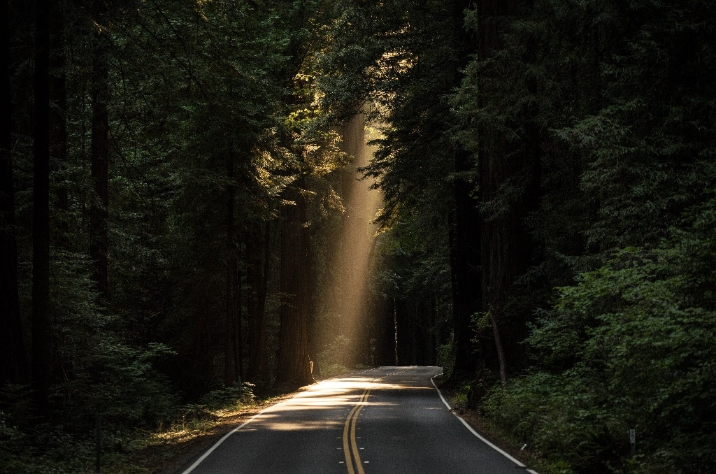 forest highway in sunlight, psychedelic research, legal activism
