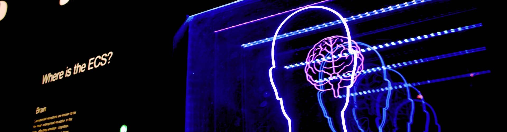 neon sign of brain, how psychedelics work in the brain