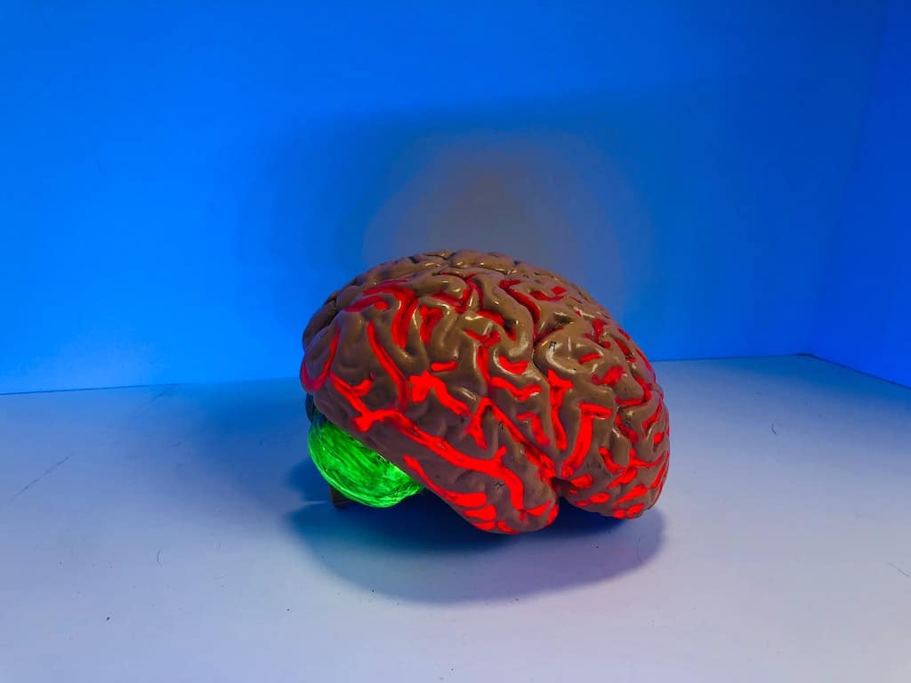 illuminated model of brain, how psychedelics work in the brain