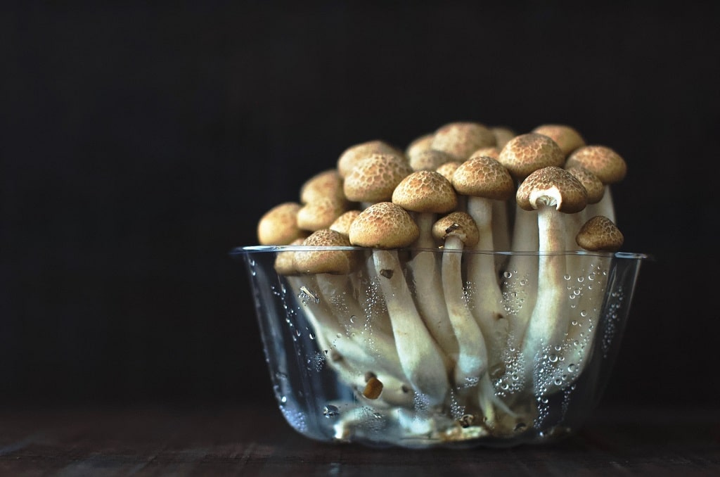 mushrooms growing in cup, how much does psilocybin cost
