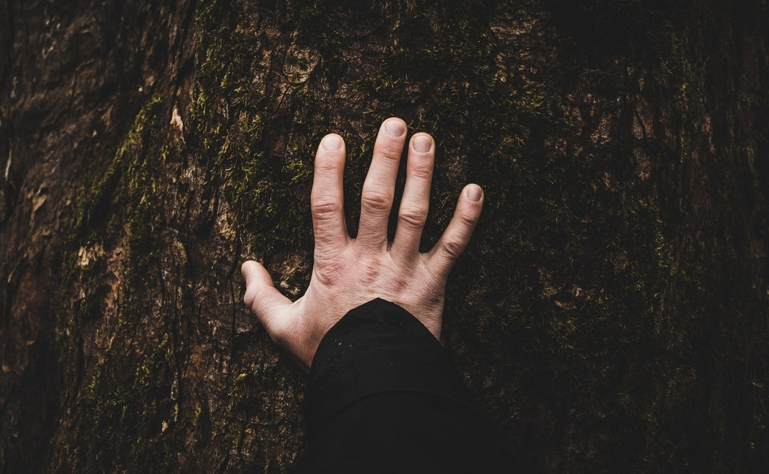 hand on tree considering the weeks and months after a psychedelic trip