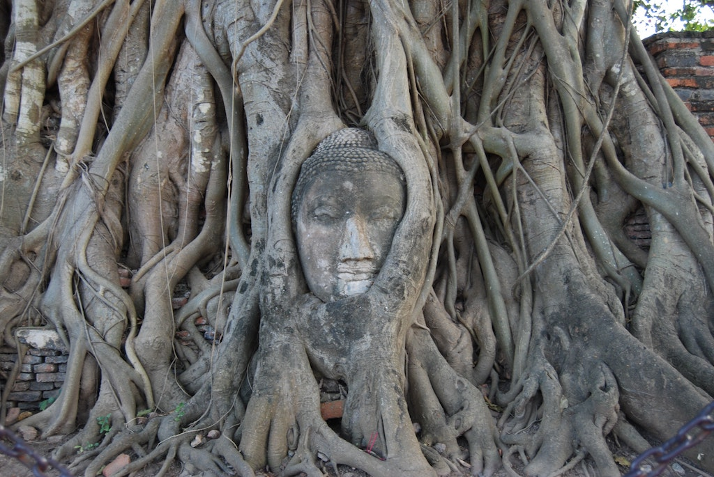 tree roots with buddha face carved on them, how to use psychedelics for stress relief