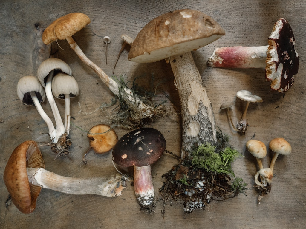 variety of foraged mushrooms, where to get psychedelics legally