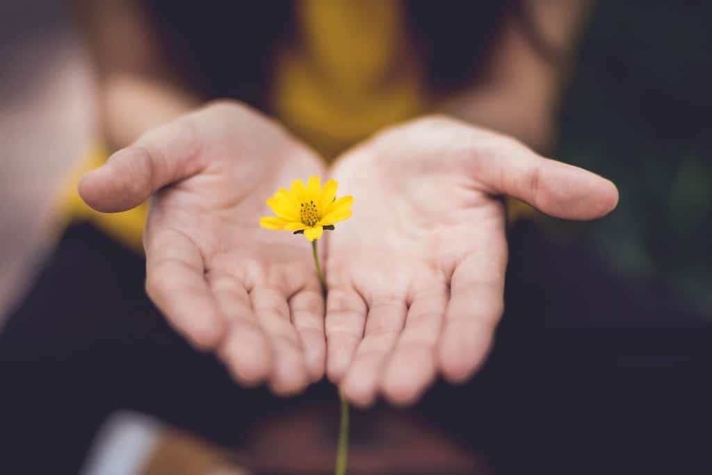 woman holding yellow flower, relationship between humans and psychedelics