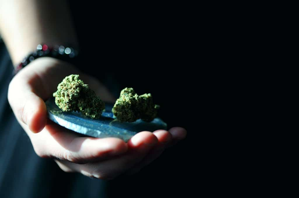 hand holding two cannabis nugs, cannabis reform
