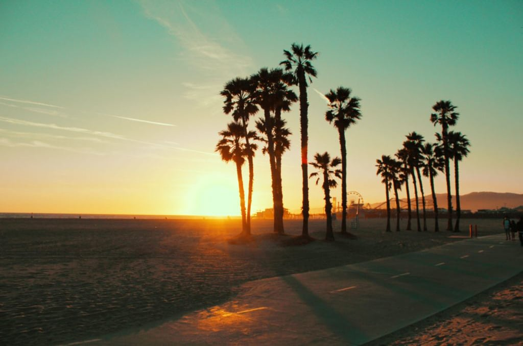 california sunset with palm trees, psychedelic reform