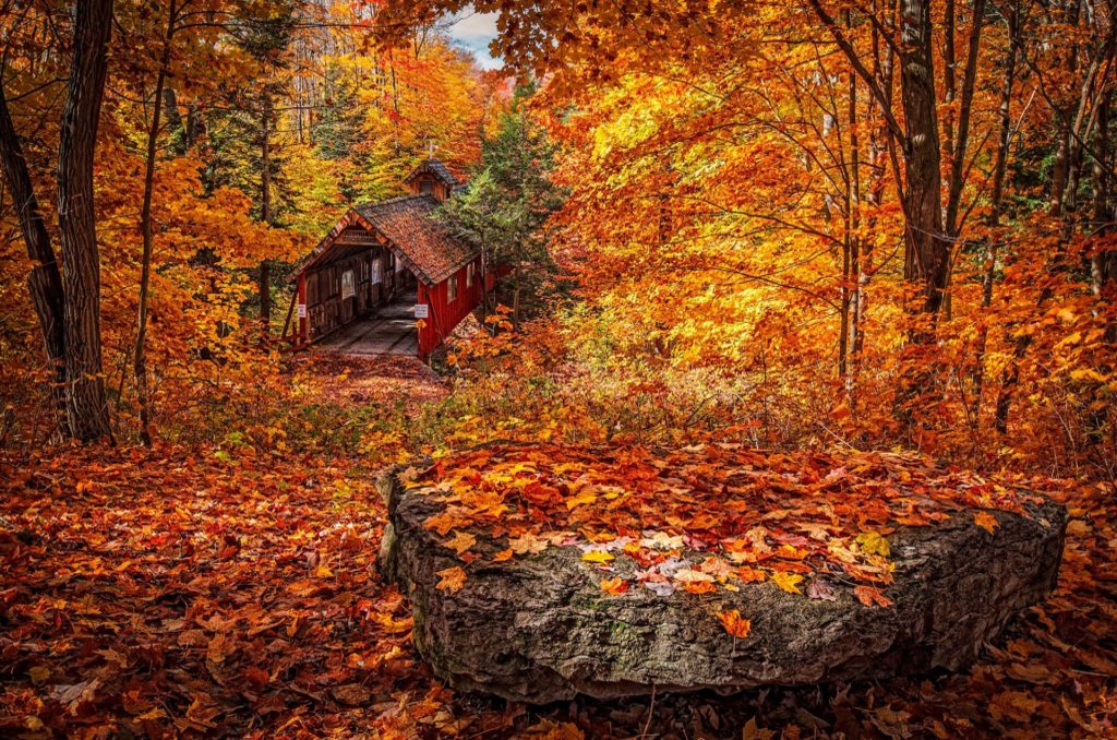fall leaves in michigan, psychedelic reform