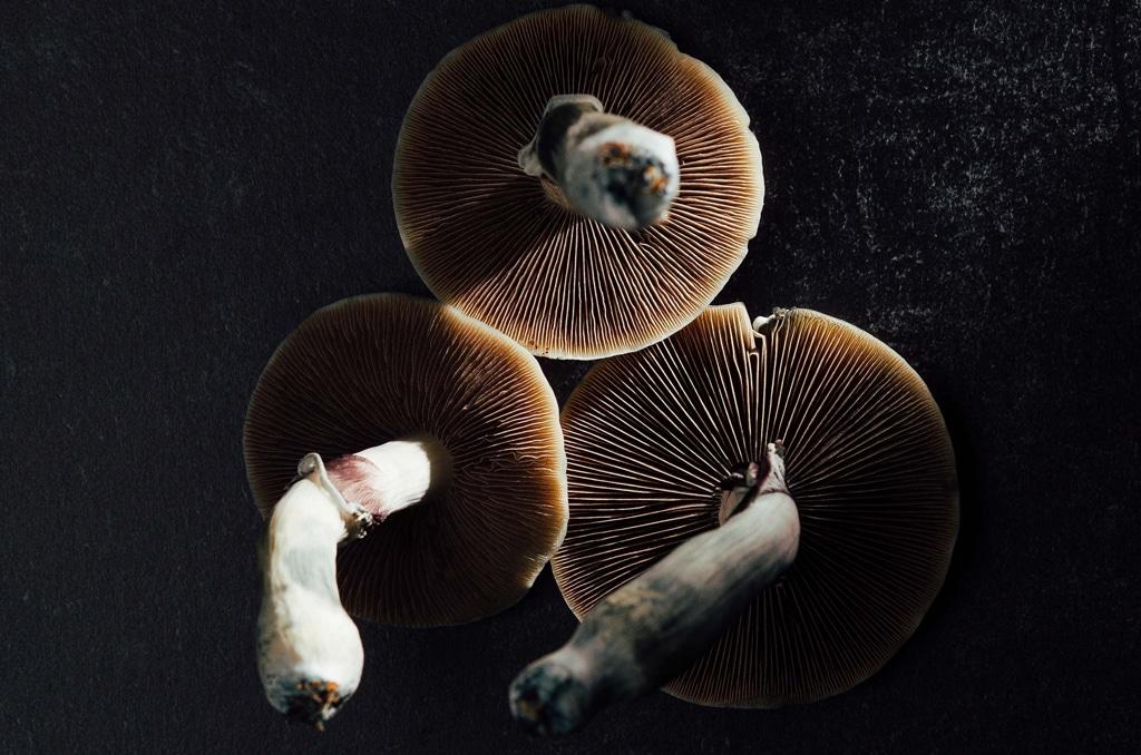 three psilocybin containing mushrooms on dark table